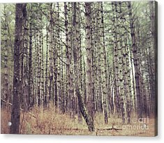 The Preaching Of The Pines Acrylic Print by Kerri Farley