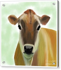 The Pretty Jersey Cow  Acrylic Print