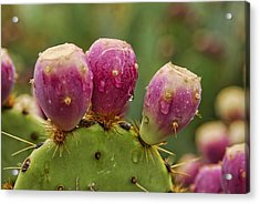 The Prickly Pear  Acrylic Print by Saija  Lehtonen