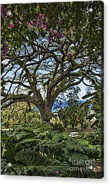The Pride Of St. Kitts Acrylic Print by Ken Johnson
