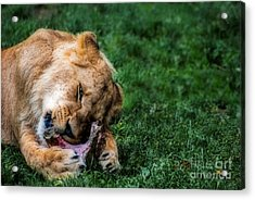 The Prince Is Hungry Acrylic Print by Hannes Cmarits