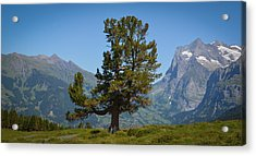 The Proud Tree Acrylic Print by Stefan Hoareau