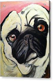 The Pug Acrylic Print by Melissa Bollen