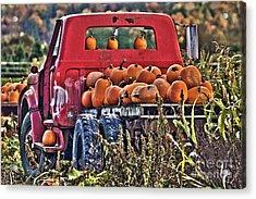 The Pumpkin Hauler Acrylic Print by Sonya Lang