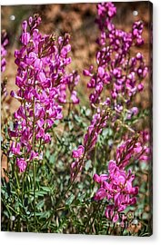 The Purple Flowers In The Desert Hdr Acrylic Print by Mitch Johanson