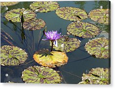 The Purple Water Lily With Lily Pads - Two Acrylic Print by J Jaiam