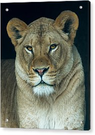 The Queen Acrylic Print by Phil Abrams