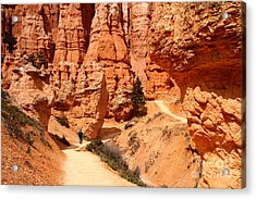 The Queens Garden Trail Bryce Canyon Acrylic Print by Butch Lombardi