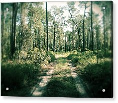 The Quiet Walk Acrylic Print by Chasity Johnson