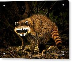 The Raccoon 20150211brun Acrylic Print by Wingsdomain Art and Photography
