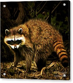 The Raccoon 20150215brun Square Acrylic Print by Wingsdomain Art and Photography