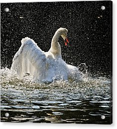 The Rain Dance Acrylic Print by Terry Cosgrave