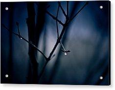 The Rain Song Acrylic Print by Shane Holsclaw