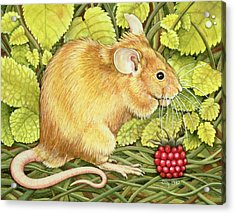 The Raspberry Mouse Acrylic Print by Ditz