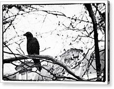 The Raven Acrylic Print by John Rizzuto