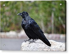 The Raven Acrylic Print by Lars Lentz
