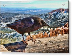 The Raven Acrylic Print by Marti Green