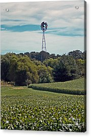The Real Greening Acrylic Print by Skip Willits