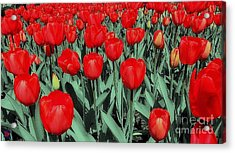 The Red Acrylic Print by Andy Heavens