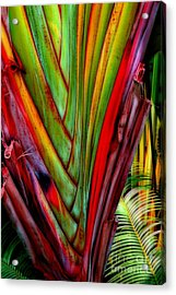 The Red Jungle Acrylic Print by Joseph J Stevens