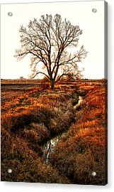 The Red Morning Acrylic Print by Kimberleigh Ladd