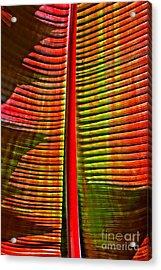 The Red Palm Acrylic Print by Joseph J Stevens