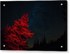 The Red Tree On A Starry Night Acrylic Print by Brian Xavier