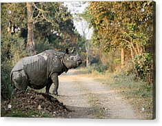 The Rhino At Kaziranga Acrylic Print by Fotosas Photography