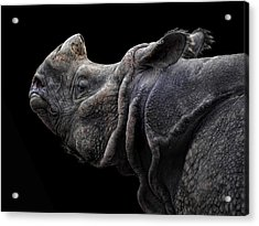 The Rhino Acrylic Print