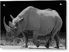 The Rhino Acrylic Print
