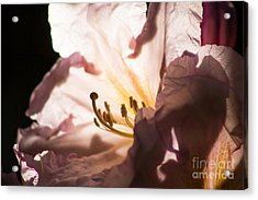 The Rhododendron Forest B Acrylic Print by Jennifer Apffel