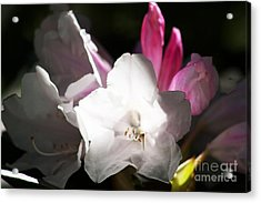 The Rhododendron Forest C Acrylic Print by Jennifer Apffel
