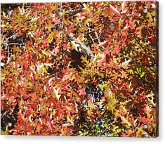 The Rich Reds And Yellows Of Fall Acrylic Print by James Rishel