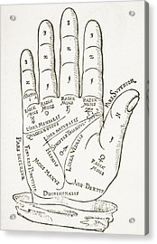 Antique Palmistry Diagram  The Right Hand Acrylic Print