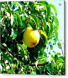 The Ripe Pear Acrylic Print by Kay Gilley