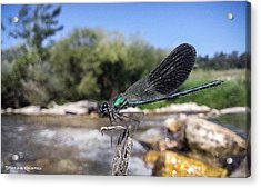 Acrylic Print featuring the photograph The River Dragonfly by Stwayne Keubrick