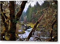 The River Through The Trees Acrylic Print