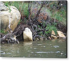 The River's Edge Acrylic Print