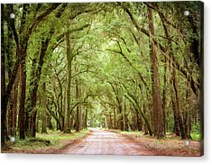 The Road And The Trees Acrylic Print