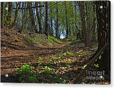 The Road In Spring Forest Acrylic Print by
