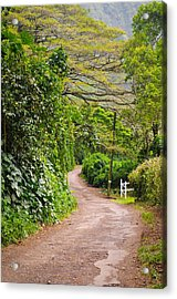 The Road Less Traveled Acrylic Print by Denise Bird