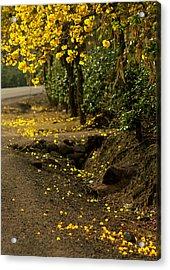 The Road Not Taken Acrylic Print by Ramon Fernandez