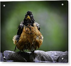 The Robin At 6-58 A.m. Acrylic Print