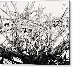 The Roots In Black And White Acrylic Print by Lisa Russo