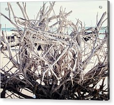 The Roots Acrylic Print by Lisa Russo