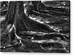The Roots Acrylic Print by Sophie Vigneault