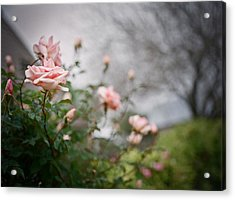 The Rose Garden Acrylic Print by Linda Unger