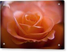 The Rose Acrylic Print by Kim Lagerhem