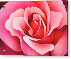 The Rose Acrylic Print by Natasha Denger