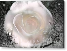 The Rose The Symbol Of Love Acrylic Print